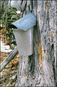 Maple Syrup Bucket